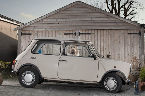 The Silence of Dogs in Cars Martin Usborne